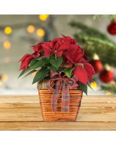 Christmas Poinsettia, floral gift baskets, plant gift baskets