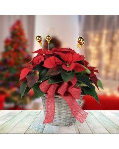 Festive Poinsettia Basket, floral gift baskets, plant gift baskets