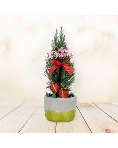 Mini Christmas Tree, floral gift baskets, Christmas gift baskets, plant gift baskets