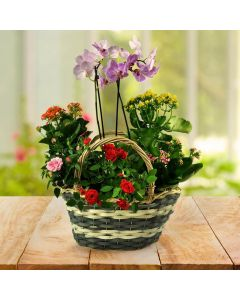 Orchids, Roses, and Kalanchoe