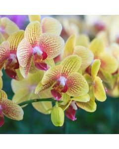 Orchids & Exotics